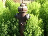 Rusty hydrant