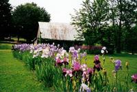 beautiful barns 2