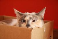 Lua in the Box