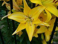 some more beautigul flowers