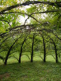 willow pavilion 1