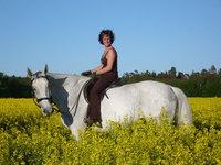 Horse in Flowerfield