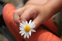 Blume in Annas Hand