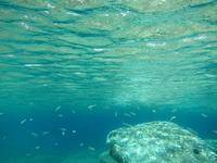 Underwater landscape 2