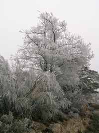 Apocalipsis invernal