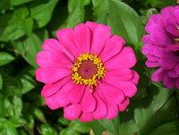 Flowers at my garden 5