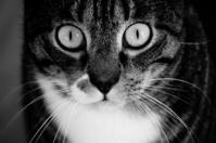 a cat 3