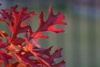 Zmena - zmena ročného obdobia - jeseň - jesenné červené lístie