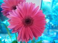 Colourised Flower