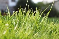 Grassy Garden 2