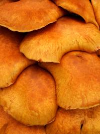 Stacked Fungi